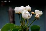 flori de par